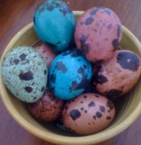 Easter quail eggs